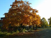02_Herbst