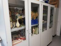 12_Biologie-Sammlung